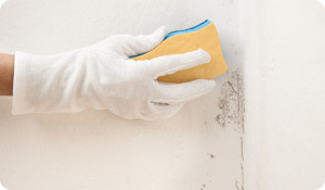 8 Ways to Clean Up Your Mold-Related Asthma