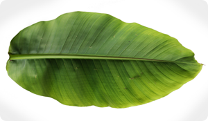 The Growing Popularity of Banana Leaf