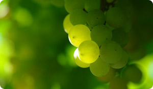 The Heart-Healthy Benefits of Grapes